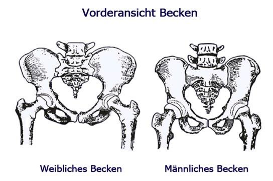 weibliches und männliches Becken