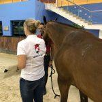 Al Forsan Stables Horse