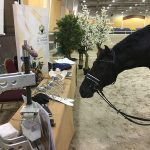 Al Forsan Stables Horse inspecting the materials