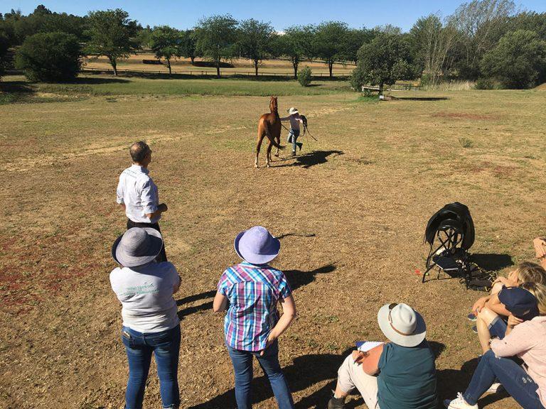 Pferde Ergonom Kurs Johannesburg